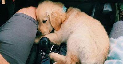 Das verrät die Schlafposition über deinen Hund
