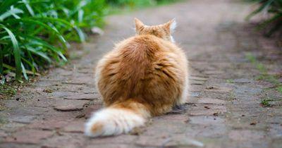 Das bedeutet es, wenn dir deine Katze den Rücken zudreht: