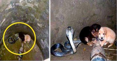 Zwei Welpen fallen mit einer Kobra in einen Brunnen...