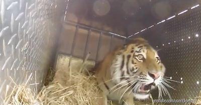 Diese Tiere erleben das erste Mal Freiheit