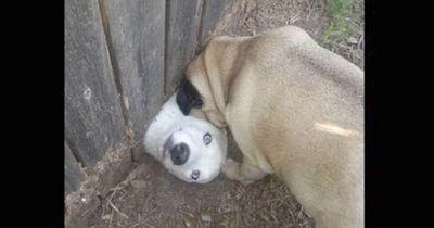 Diese Hunde bereuen ihr Lebensentscheidungen