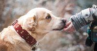 Wie Hunde bewerten, ob du ein guter Mensch bist