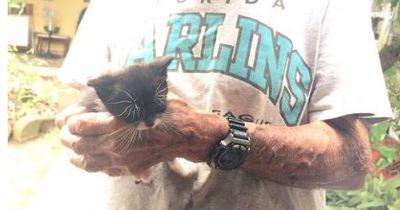 Dieser Opa zieht streunende Katzen groß, aber ...