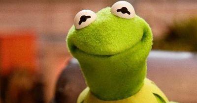 """So sieht """"Kermit"""" im echten Leben aus!"""