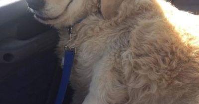 Dieser Hund hat eine OP hinter sich & wird zum Internet-Hit