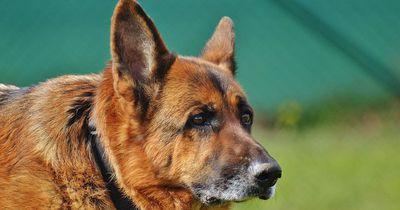 Hund rettet Kollibri - Was danach passiert ist wie im Märchen