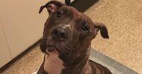 Jeden Tag zeigt dieser Hund, wie dankbar er für seine Rettung ist