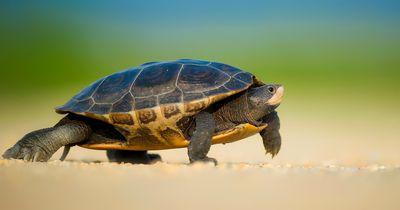 Zwei Baby Schildkröten:  Das Süßeste sind, was du je gesehen hast