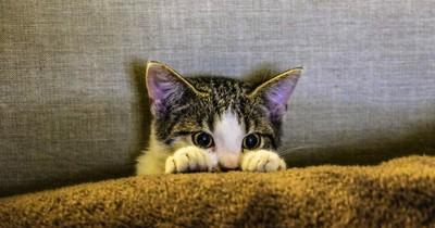 5 Anzeichen, dass deine Katzen Schmerzen hat