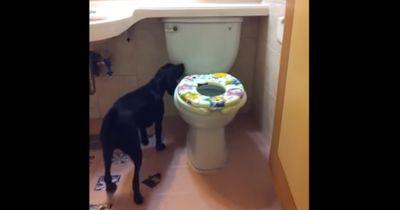 Herrchen filmt Hund: Was bei 0:16 passiert kann keiner glauben!