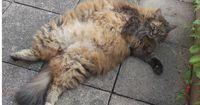 Diese Bilder von fetten Katzen werden deinen Tag verbessern