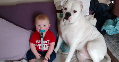 16 Dinge, die jeder Mensch kennt, der Hunde liebt und Babys hasst