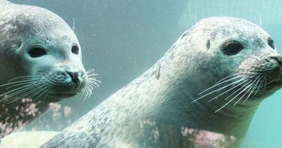 Gute Nachrichten für norwegische Robben