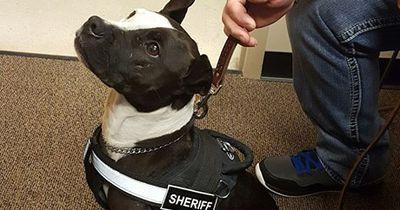 Ein Polizeihund für 15.000€? Nicht auf dieser Wache.