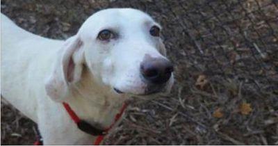 Dieser Hund kehrt immer wieder zum Tierheim zurück