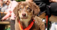 10 Mischlings-Hundewelpen, die alle Herzen höher schlagen lassen