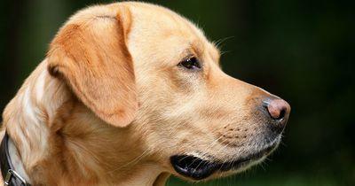 Als dieser Besitzer seinen Hund sieht, stockt ihm der Atem