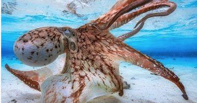 Diese Unterwasser-Fotos musst du gesehen haben!