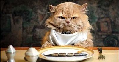 Diese 12 verrückten Dinge tut jeder Katzenbesitzer