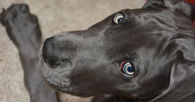 Dieser Hund wird mitten in der Nacht von seinem Besitzer geweckt