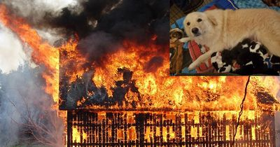 Diese Hunde-Mama verlor alle ihre Welpen