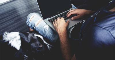 Bereicherungen des Alltags eines Hundebesitzers