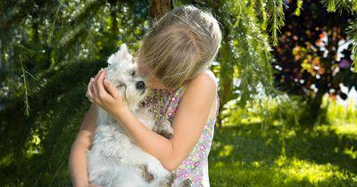 Fotos, die beweisen die Welt ist nicht gut genug für diese Hunde