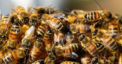 Die Biene in diesem Video leistet Unglaubliches