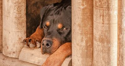 Daran erkennst Du, ob Dein Hund Diabetes hat