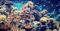 So groß können die Meeresbewohner tatsächlich werden
