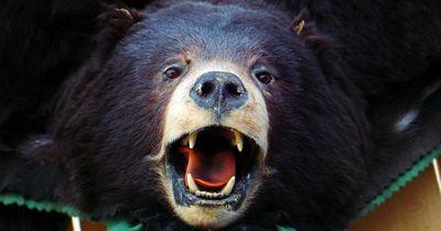 Dieses Paar begegnet einem Schwarzbären