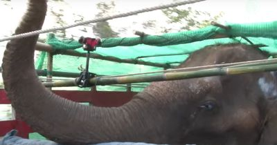 Als sie diesen Elefant weinen sahen, mussten sie handeln