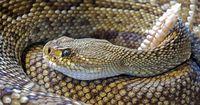Das ist die seltenste Schlange der Welt
