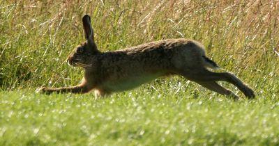 Schau dir hier eine der seltensten Tierarten der Welt an