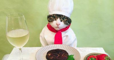 Dieser Kater ist das perfekte Dinner-Date