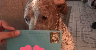 Auch nach der Trennung schickt er seinem Hund noch Geschenke