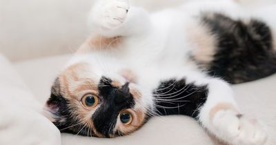 Wer diese prominente Katze findet, bekommt eine saftige Belohnung!