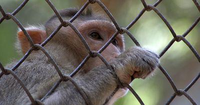 Tübinger Institut macht Ernst mit Tierschutz