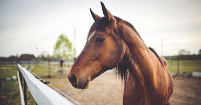 Pferd bringt Fohlen zur Welt