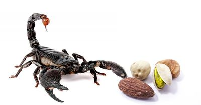 Hier wurde ein Skorpion im Flugzeug gefunden