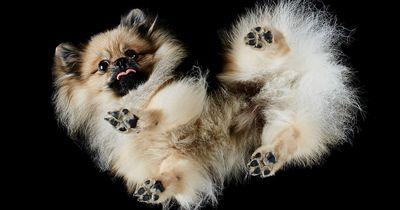 Dieses Foto-Projekt lässt Hundefan-Herzen höher schlagen