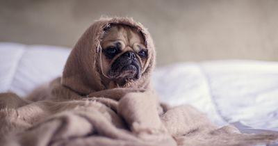5 Dinge die Besitzer machen, obwohl ihre Haustiere es hassen