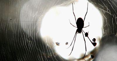 So eine Spinne hast du noch nie gesehen!