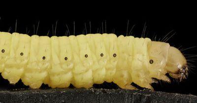 Rettet dieser Wurm die Welt?