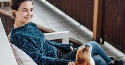 Würdet ihr diesen Hundehalter-Test aus Niedersachsen bestehen?