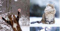 10 dramatische Katzen, die einen Oscar verdient hätten