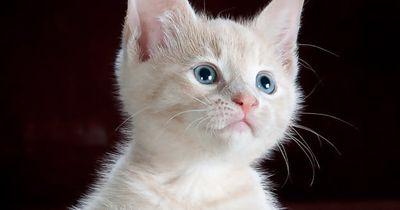 8 unglaubliche Katzen-Fakten