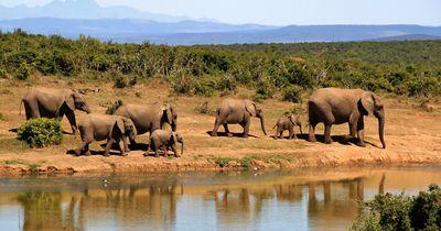 Ein Fotograf beobachtet eine Elefantenherde und macht eine seltene Entdeckung