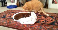 Diese Katze will ihren Freund nicht gehen lassen