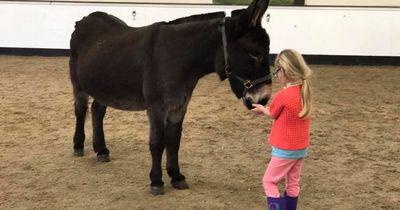 Esel bringt kleines Mädchen nach drei Jahren endlich dazu zu sprechen